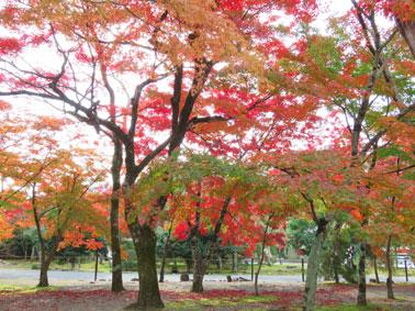 momiji3951.jpg